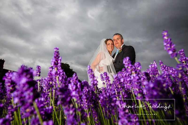 bride and groom in the lavender border at Soulton Hall, Shropshire