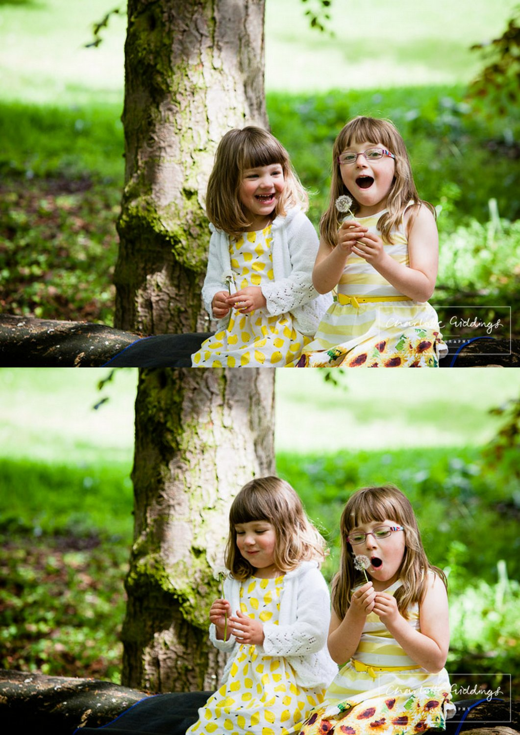 two sisters sat on a log blowing dandelion seeds giggling - shropshire portrait photographer