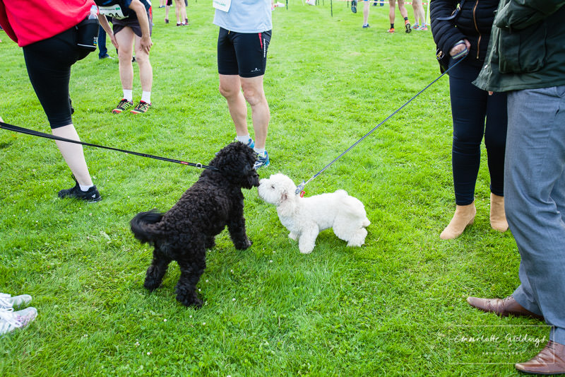 black and white dogs greeting each other having a sniff- furry supporters for the event