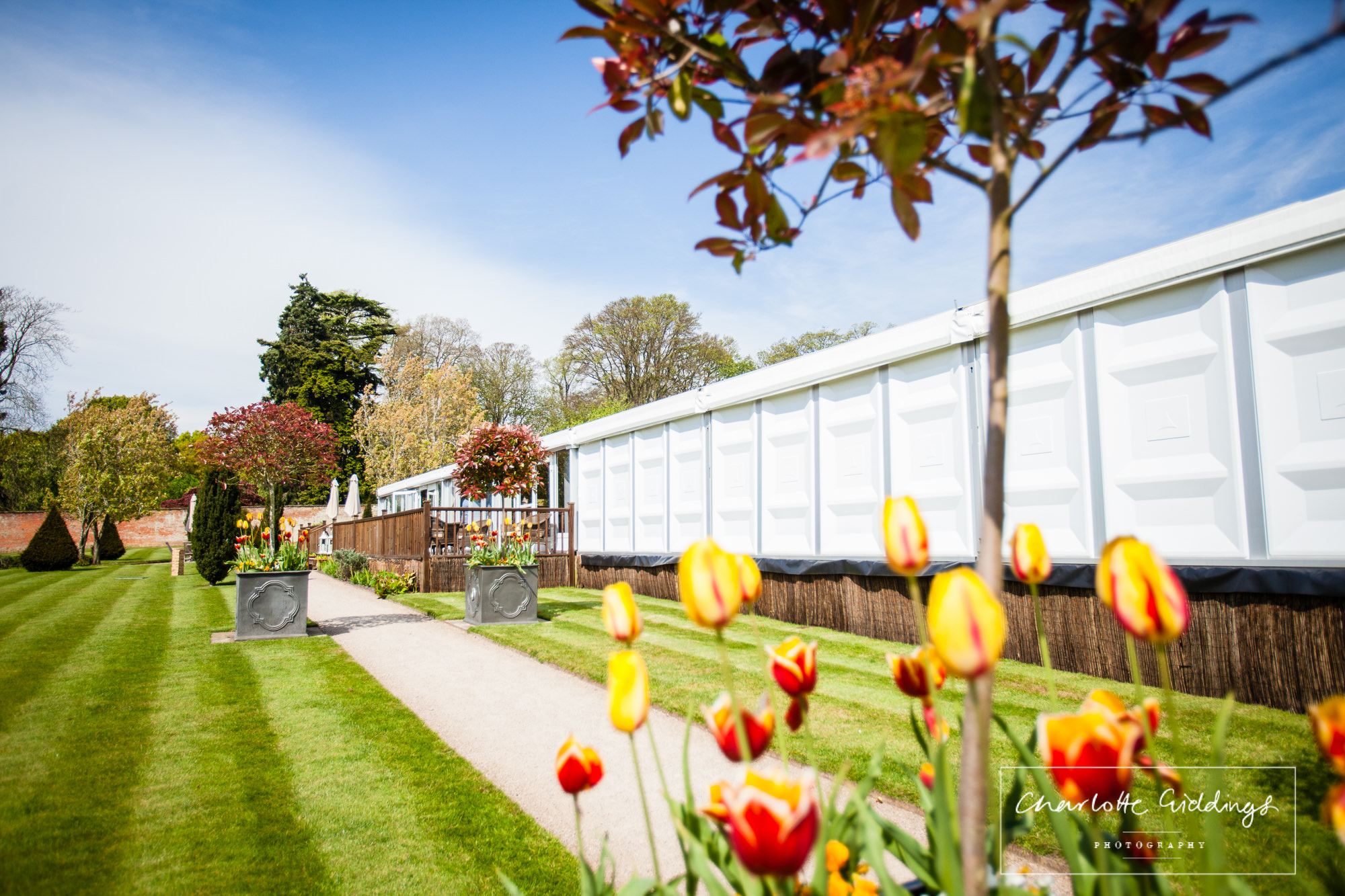 red and yellow tulips in front of combermere abbey pavillion - shropshire wedding photographer