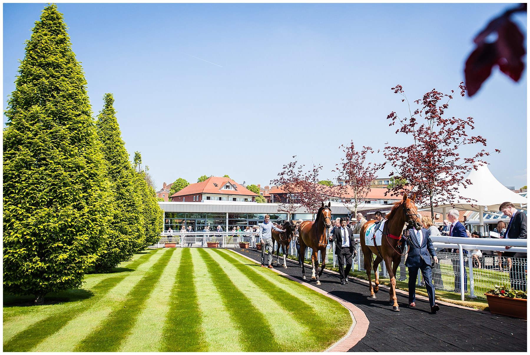 horses being walked around the pavillion chester race course - chester event photographer