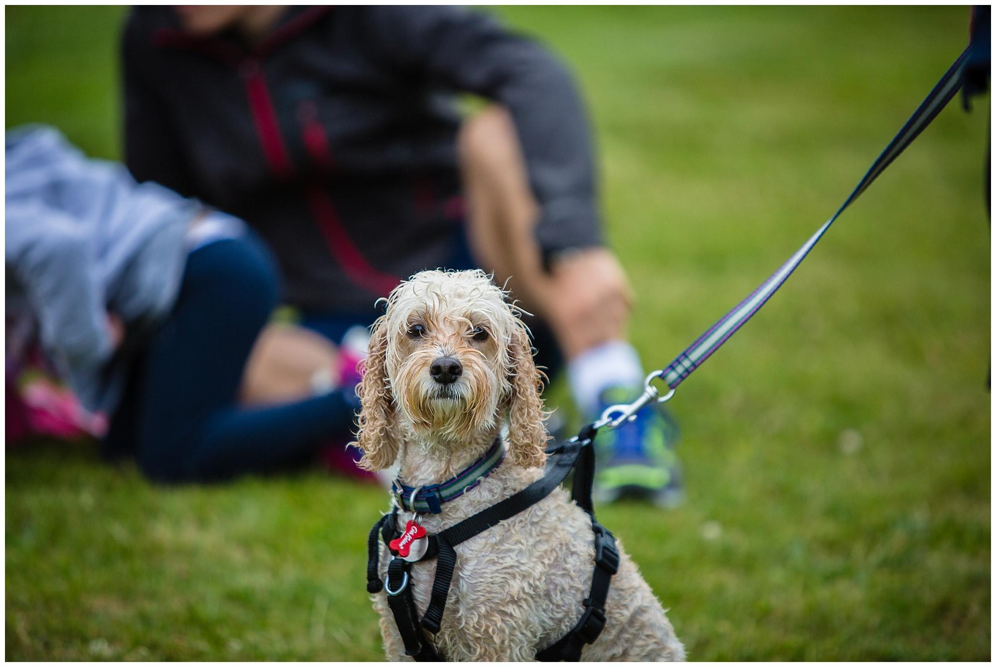 dog portrait at alderford lake 2017