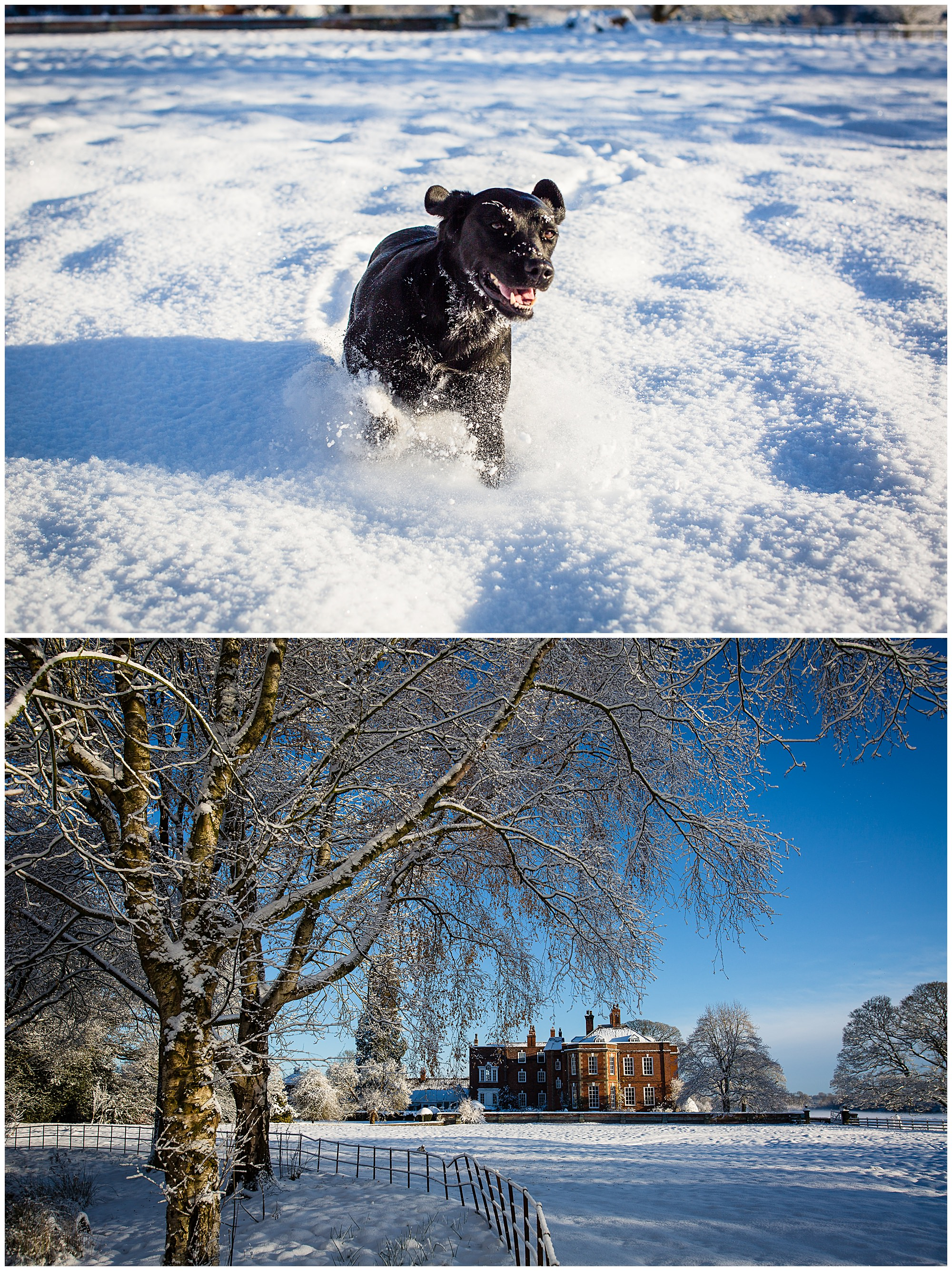 dog running in the snow at iscoyd park - Shropshire Wedding Venues in the Snow