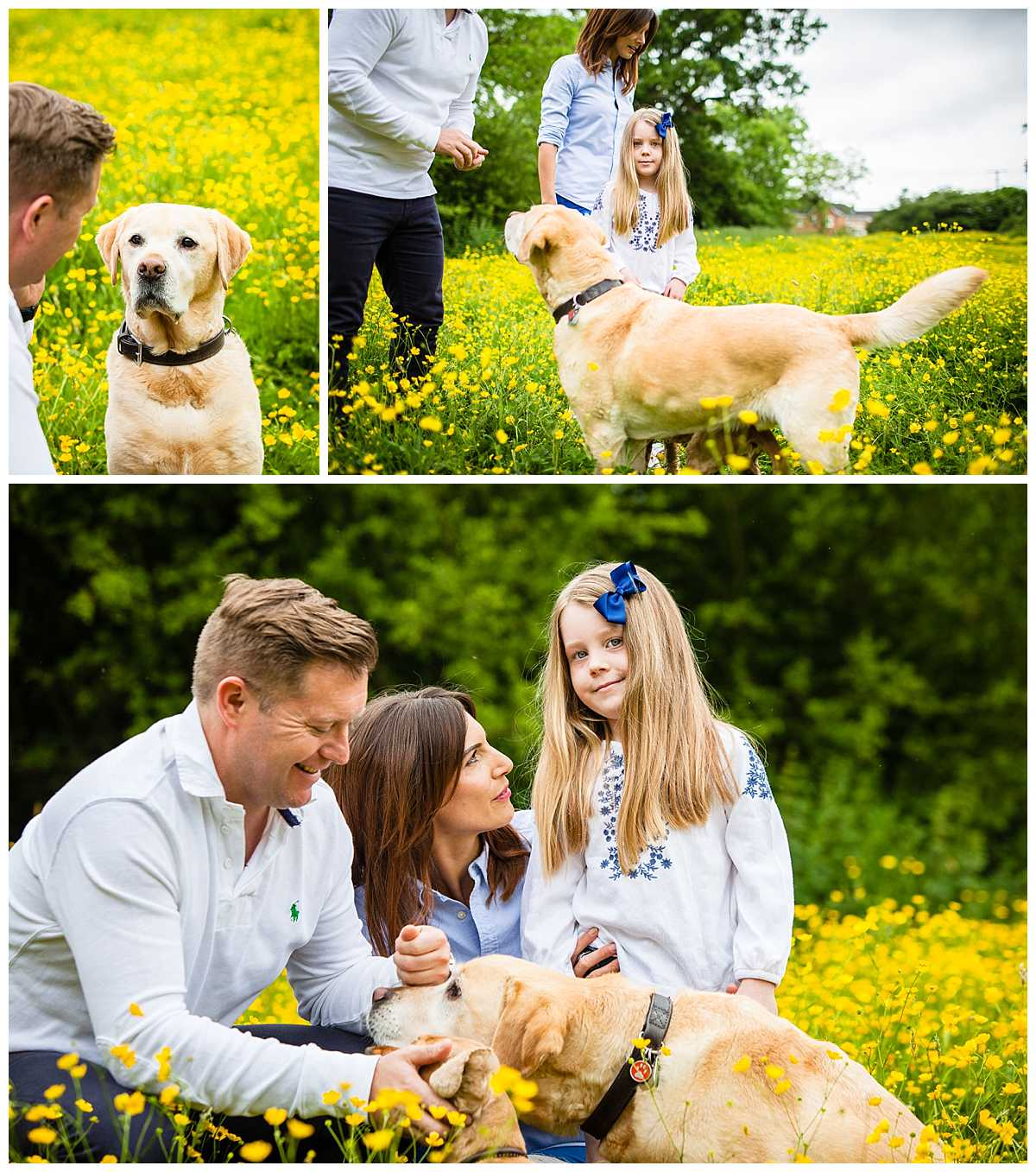 various photos with golden labrador dog looking at owner amongst lots of yellow buttercups