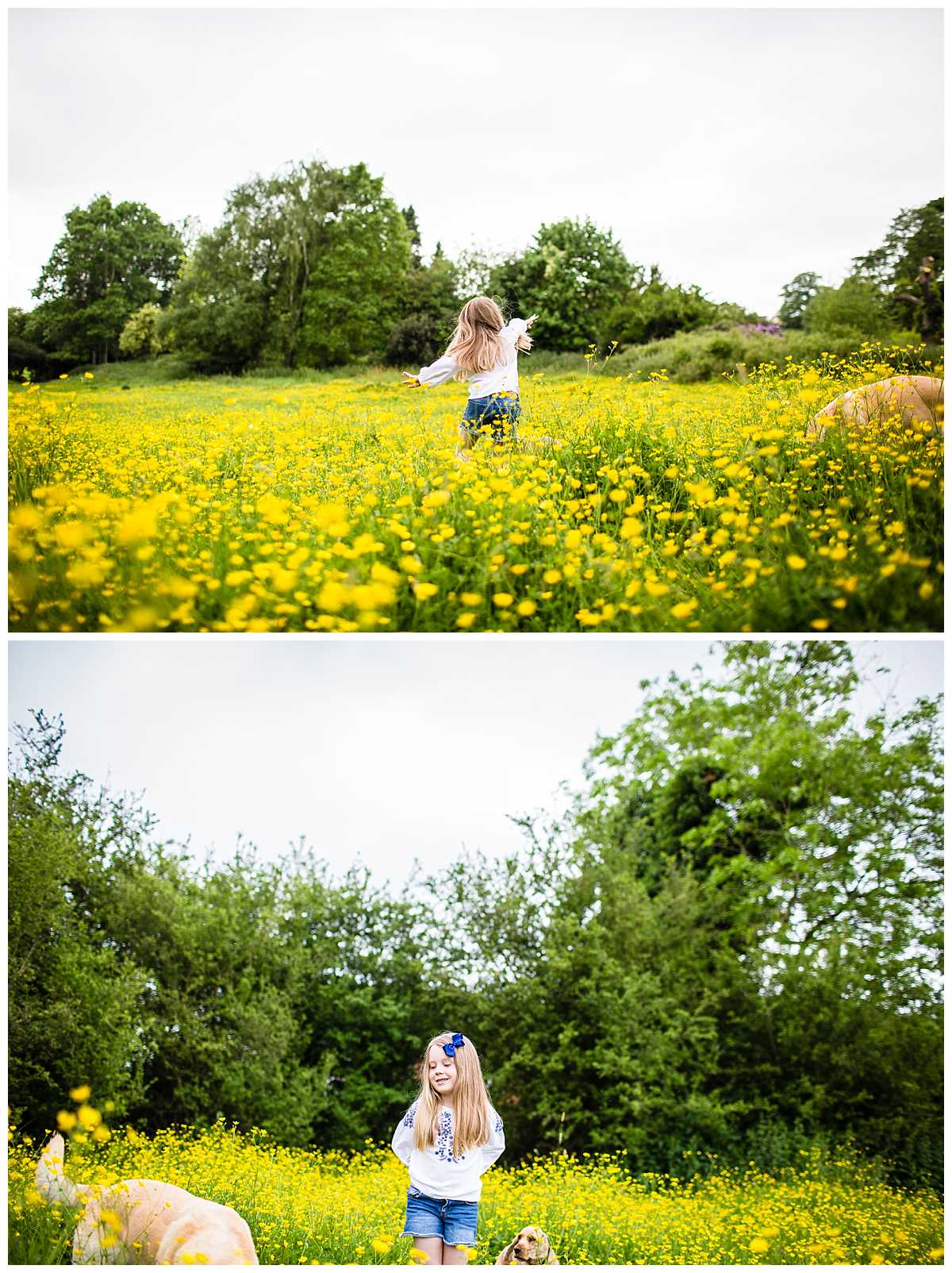 little girl jumping around in a sea of buttercups in a field - Whitchurch Shropshire Family Photographer
